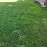 Der gesähte Rasen vorher.